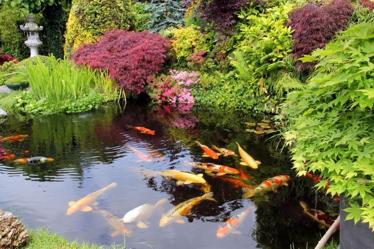 Biotope und Schwimmteiche